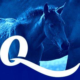 Criação de logotipo, identidade visual e site para Qualy Nutrição Animal